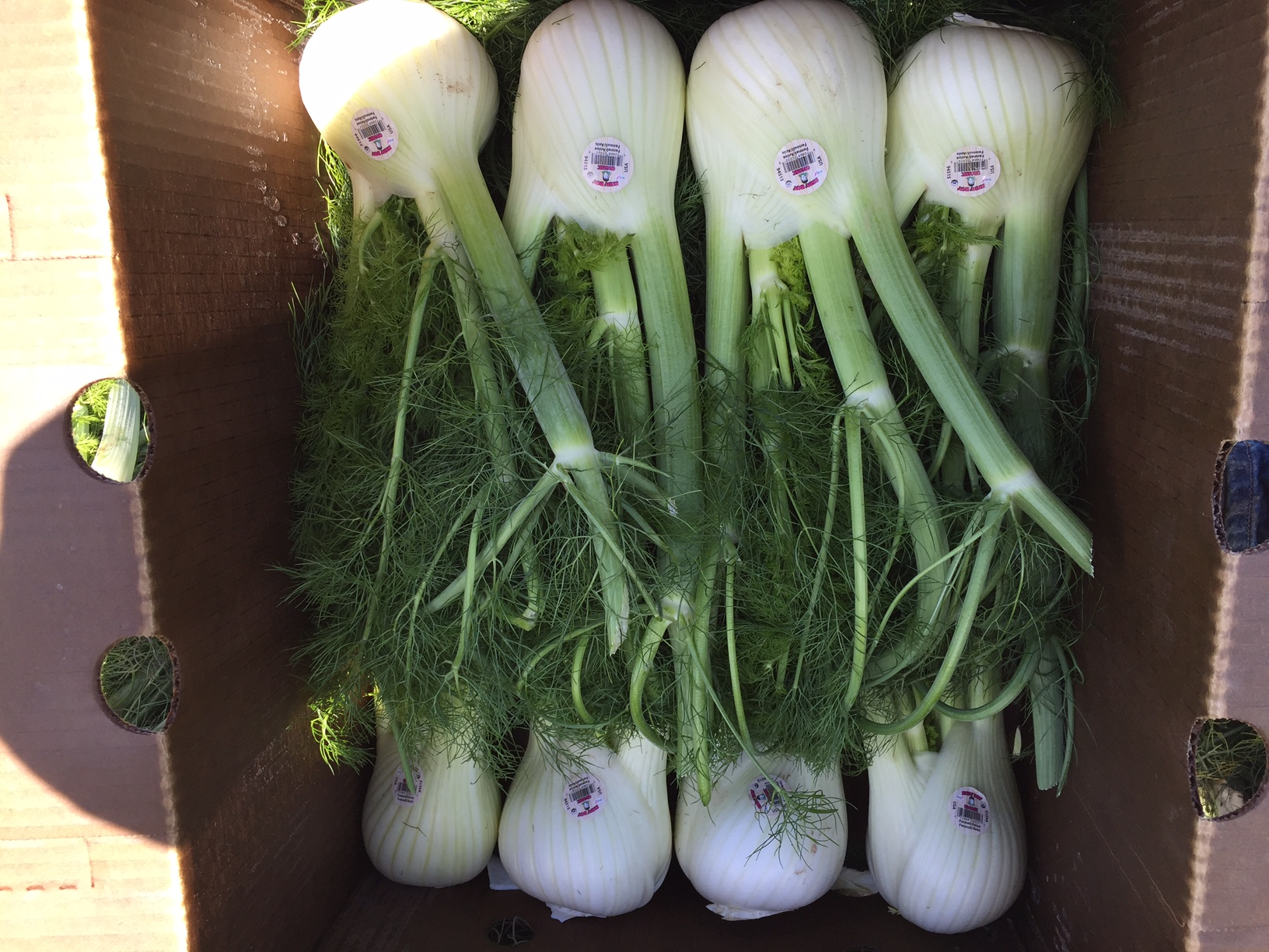 organic-fennel-andy-boy